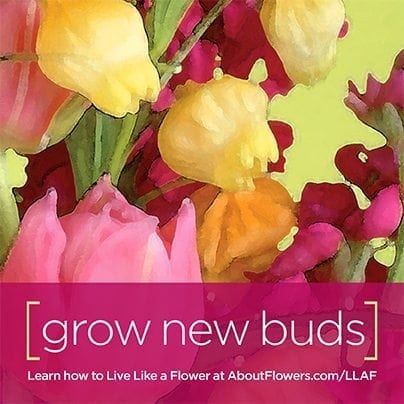 LIVE LIKE A FLOWER Facebook Graphic