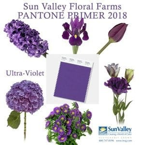 Sun Valley Floral Farms created a graphic highlighting the color selection
