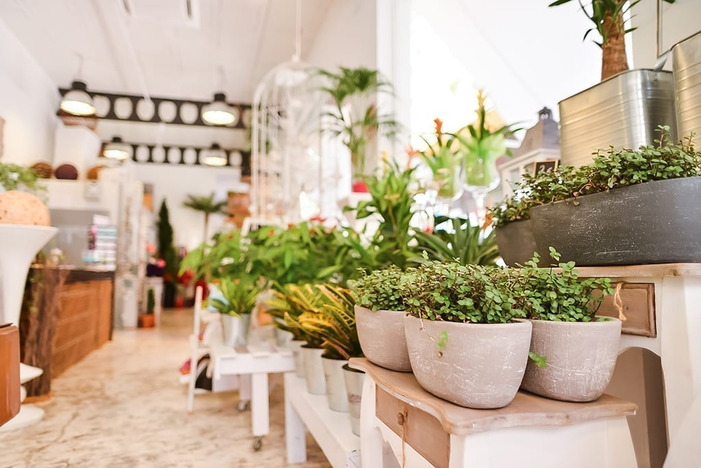 Learn How to Capitalize on the Houseplant Trend
