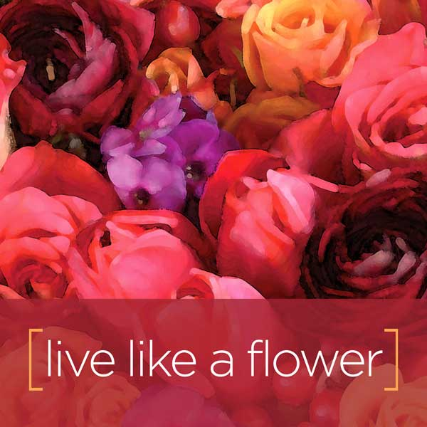 live-like-a-flower-pollinate
